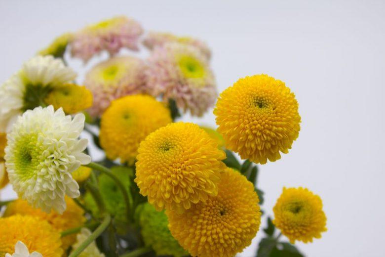 h3-2 長持ちする花にしましょう