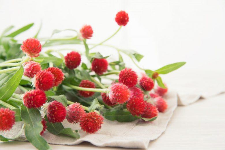 h3-21 千日紅の花言葉