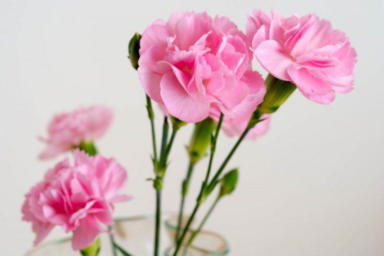 h3-25 カーネーションの花言葉