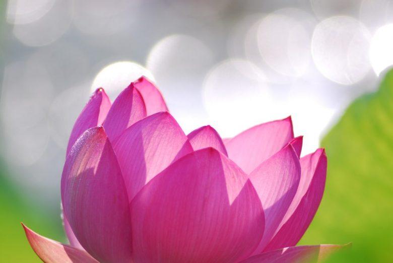 h3-30 仏壇の造花は作り物ならではのデメリットが